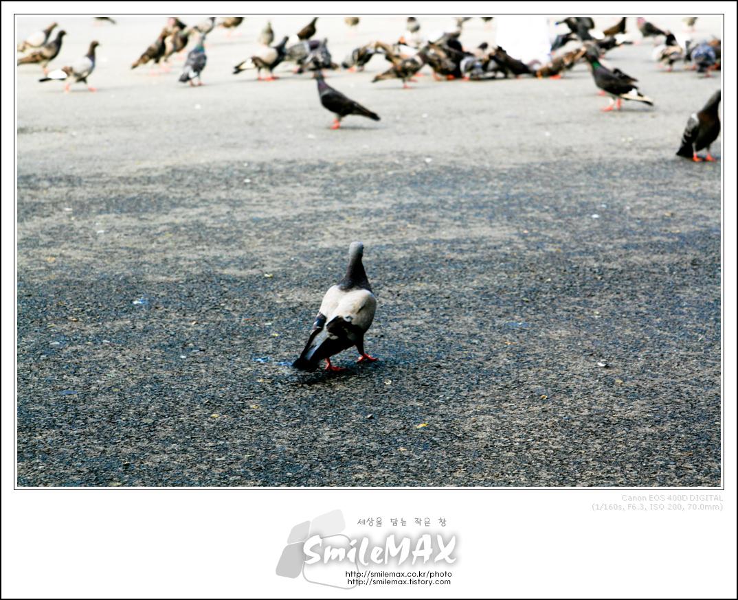 비둘기...